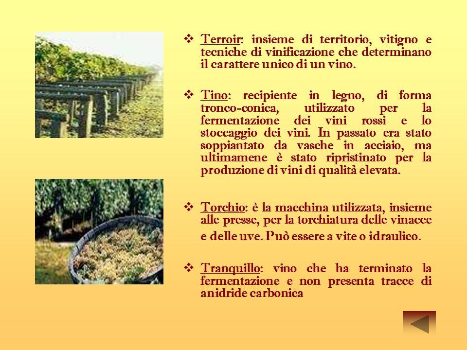 Terroir: insieme di territorio, vitigno e tecniche di vinificazione che determinano il carattere unico di un vino.