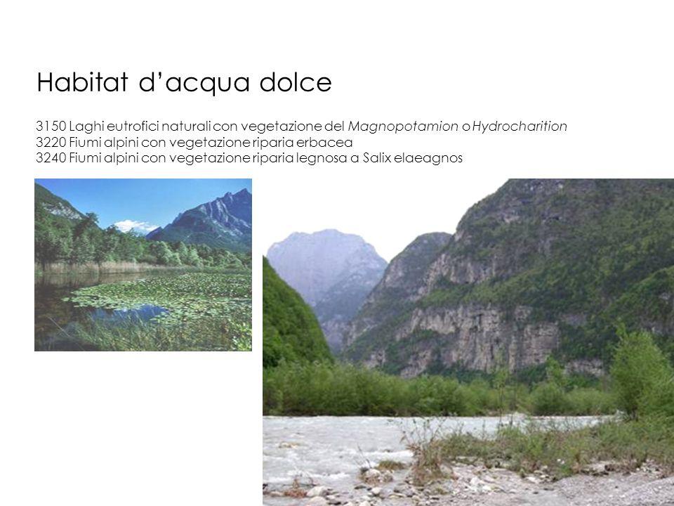 Habitat d'acqua dolce 3150 Laghi eutrofici naturali con vegetazione del Magnopotamion o Hydrocharition.