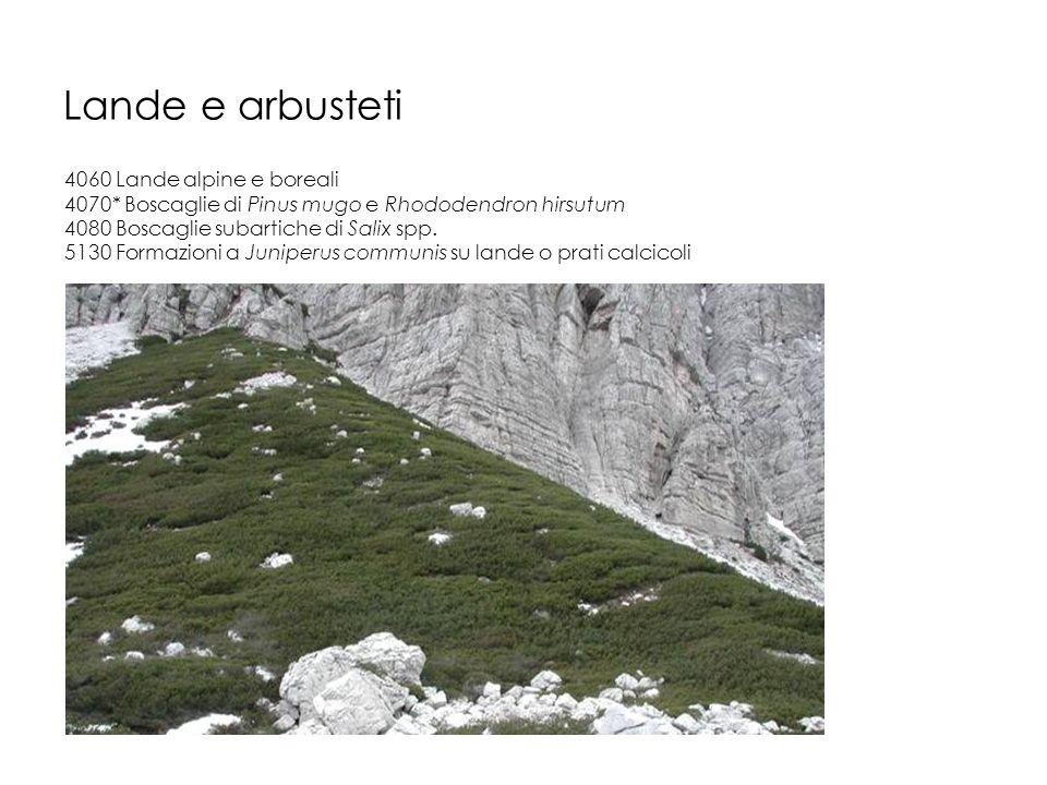 Lande e arbusteti 4060 Lande alpine e boreali
