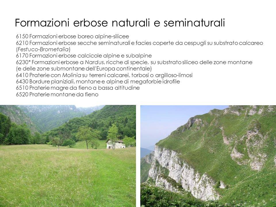 Formazioni erbose naturali e seminaturali