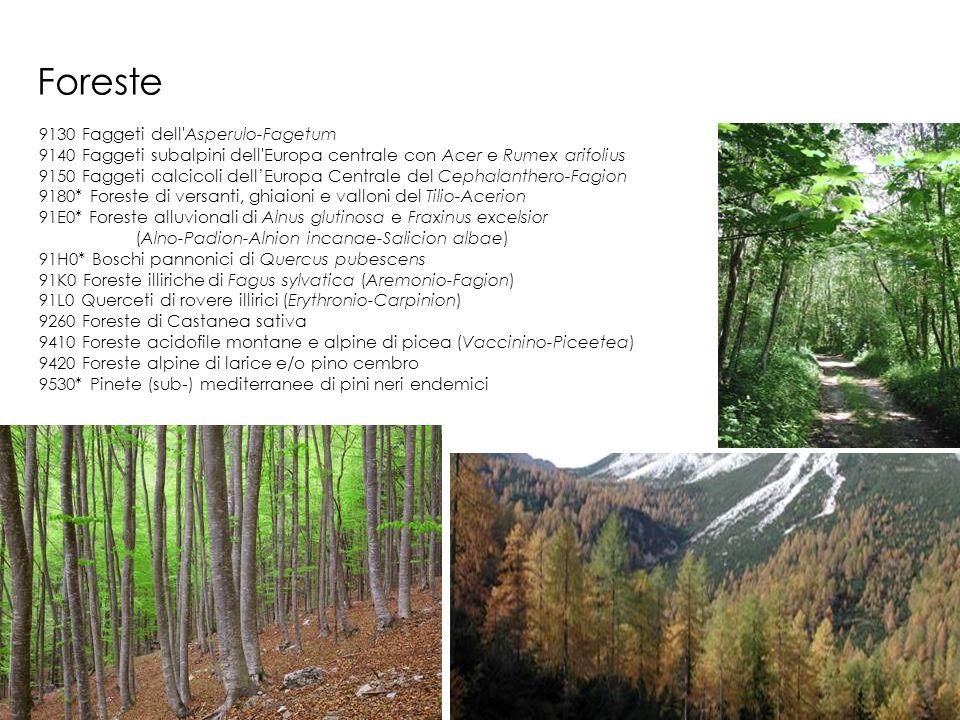 Foreste 9130 Faggeti dell Asperulo-Fagetum