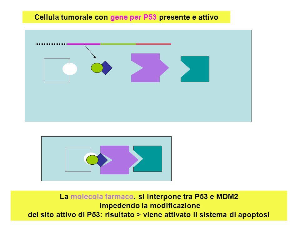 Cellula tumorale con gene per P53 presente e attivo