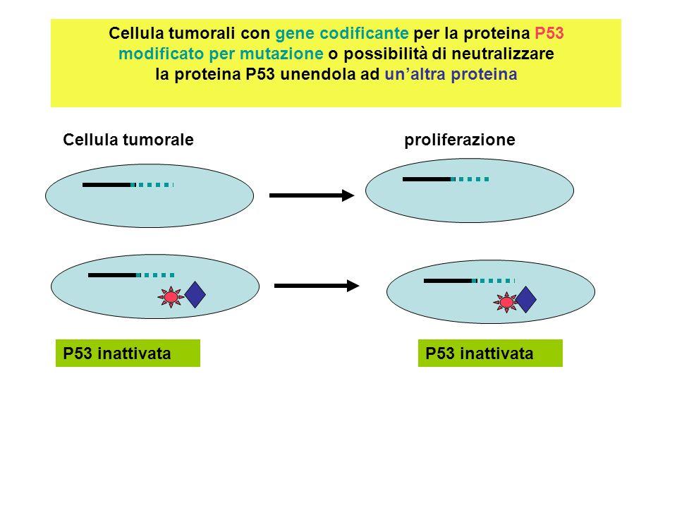 Cellula tumorali con gene codificante per la proteina P53 modificato per mutazione o possibilità di neutralizzare la proteina P53 unendola ad un'altra proteina