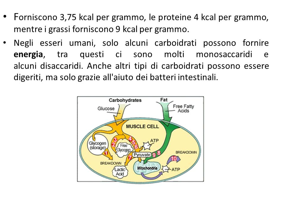 Forniscono 3,75 kcal per grammo, le proteine 4 kcal per grammo, mentre i grassi forniscono 9 kcal per grammo.