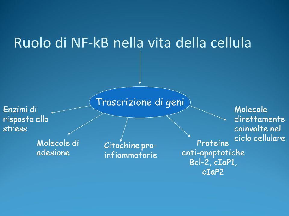 Ruolo di NF-kB nella vita della cellula