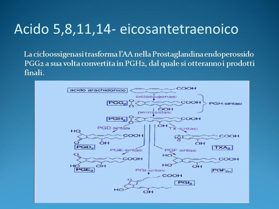 Acido 5,8,11,14- eicosantetraenoico