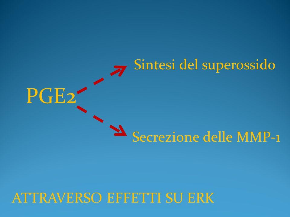 PGE2 Secrezione delle MMP-1 ATTRAVERSO EFFETTI SU ERK