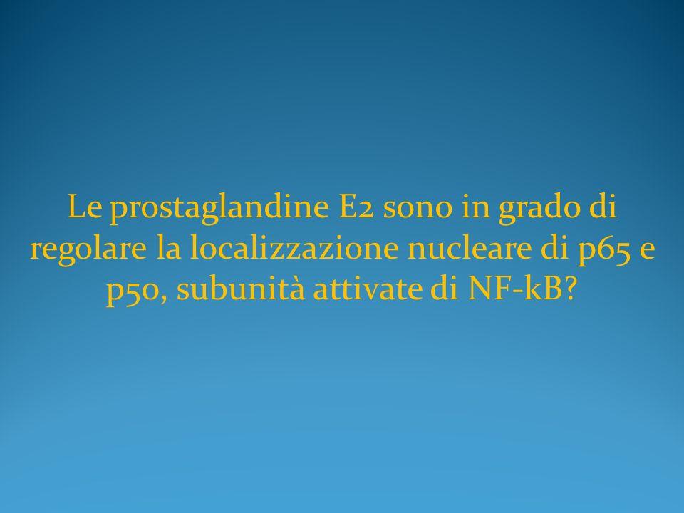 Le prostaglandine E2 sono in grado di regolare la localizzazione nucleare di p65 e p50, subunità attivate di NF-kB