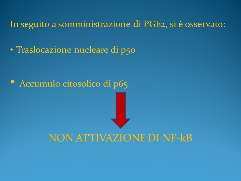 NON ATTIVAZIONE DI NF-kB