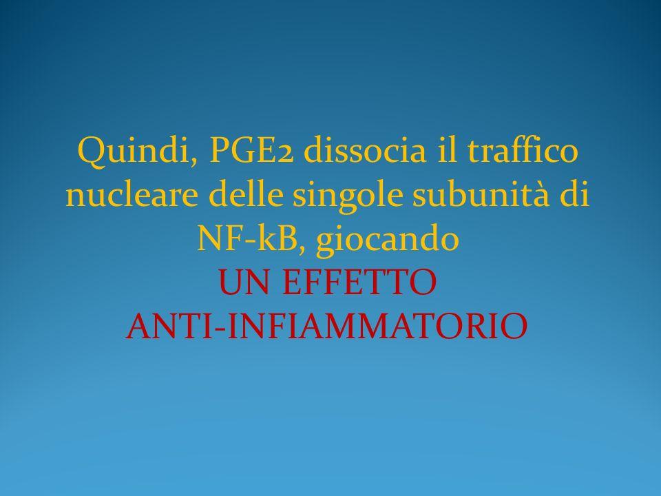Quindi, PGE2 dissocia il traffico nucleare delle singole subunità di