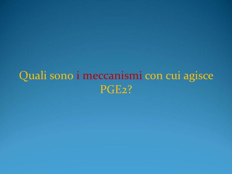 Quali sono i meccanismi con cui agisce PGE2