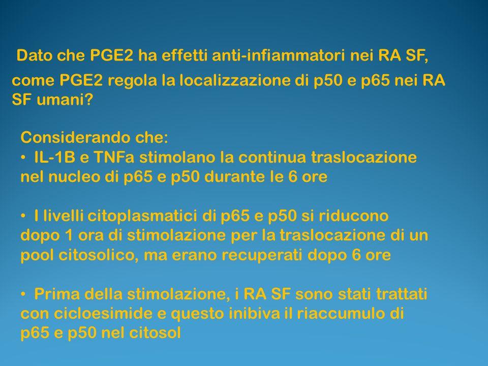 Dato che PGE2 ha effetti anti-infiammatori nei RA SF,