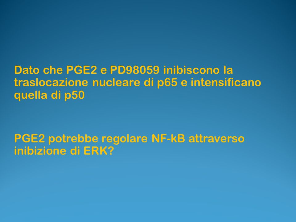 Dato che PGE2 e PD98059 inibiscono la traslocazione nucleare di p65 e intensificano quella di p50