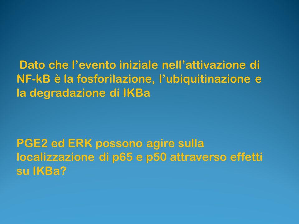 Dato che l'evento iniziale nell'attivazione di NF-kB è la fosforilazione, l'ubiquitinazione e la degradazione di IKBa
