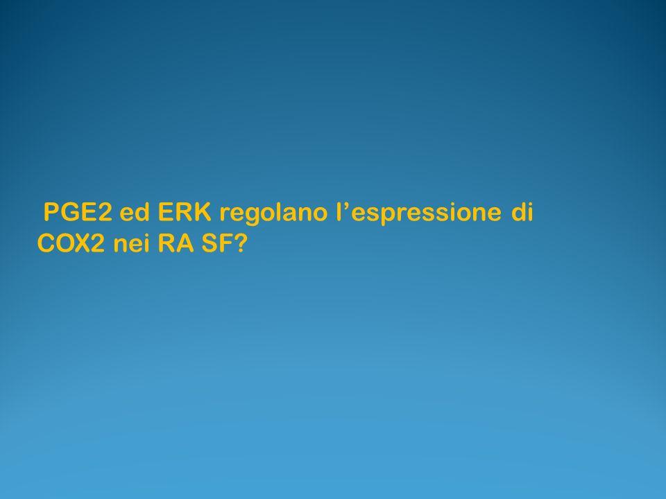 PGE2 ed ERK regolano l'espressione di COX2 nei RA SF