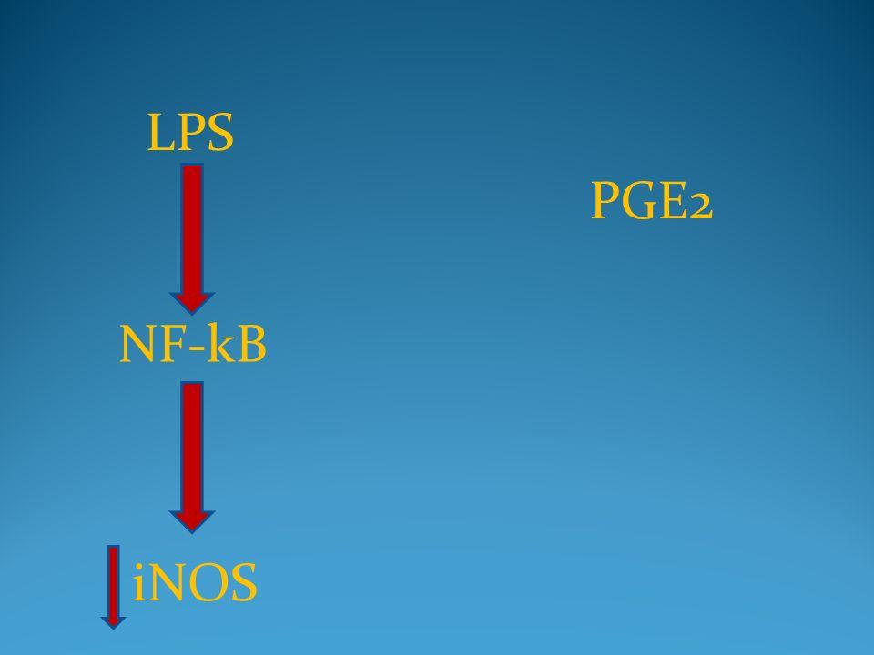 LPS PGE2 NF-kB iNOS