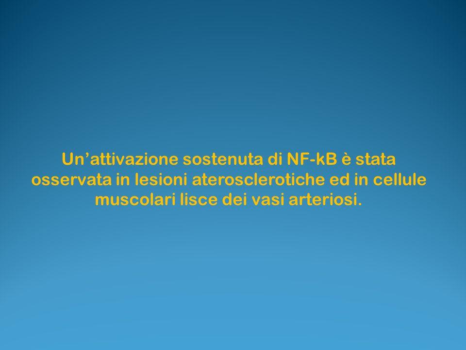 Un'attivazione sostenuta di NF-kB è stata osservata in lesioni aterosclerotiche ed in cellule muscolari lisce dei vasi arteriosi.