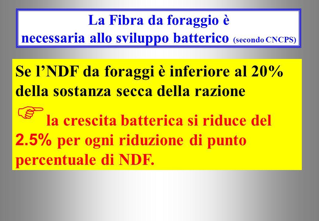 La Fibra da foraggio è necessaria allo sviluppo batterico (secondo CNCPS)