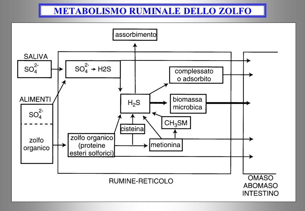 METABOLISMO RUMINALE DELLO ZOLFO