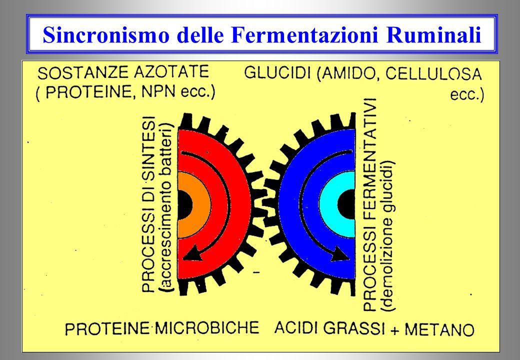 Sincronismo delle Fermentazioni Ruminali