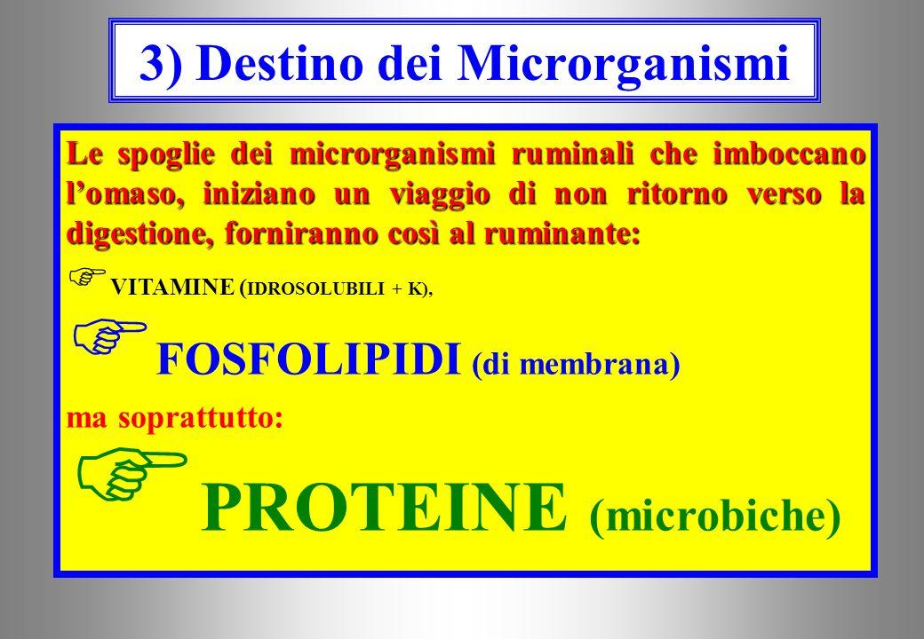 3) Destino dei Microrganismi