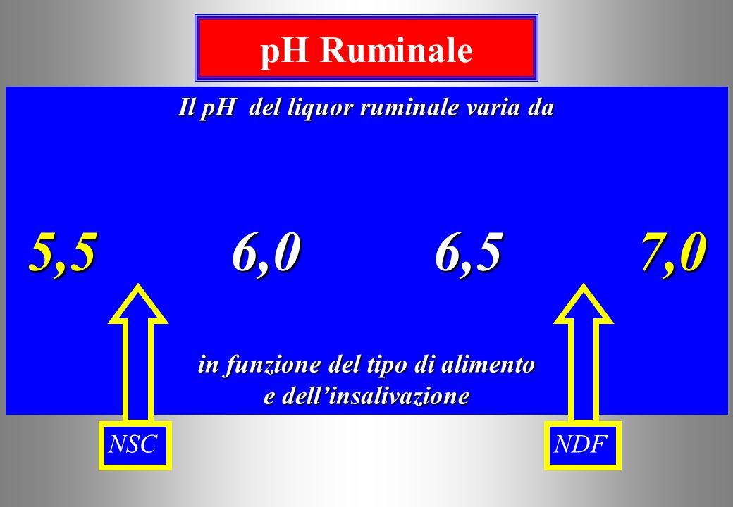 Il pH del liquor ruminale varia da in funzione del tipo di alimento