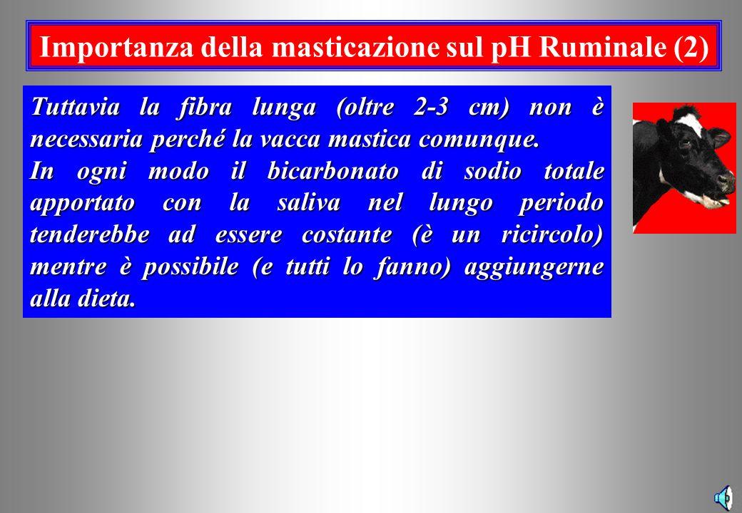 Importanza della masticazione sul pH Ruminale (2)
