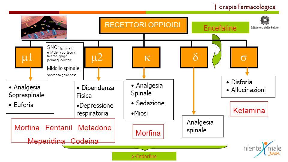 Morfina Fentanil Metadone