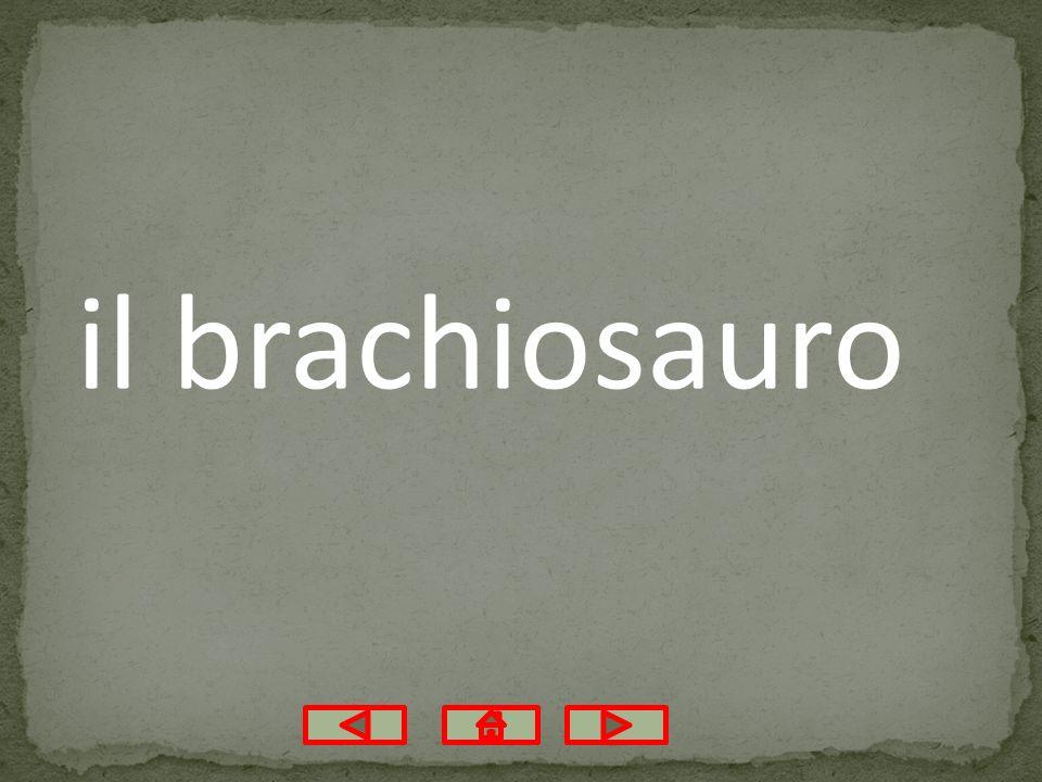 il brachiosauro