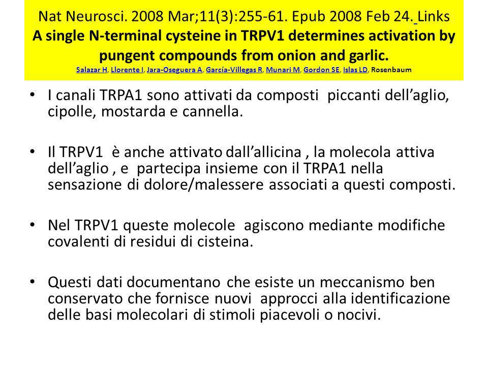 Nat Neurosci. 2008 Mar;11(3):255-61. Epub 2008 Feb 24