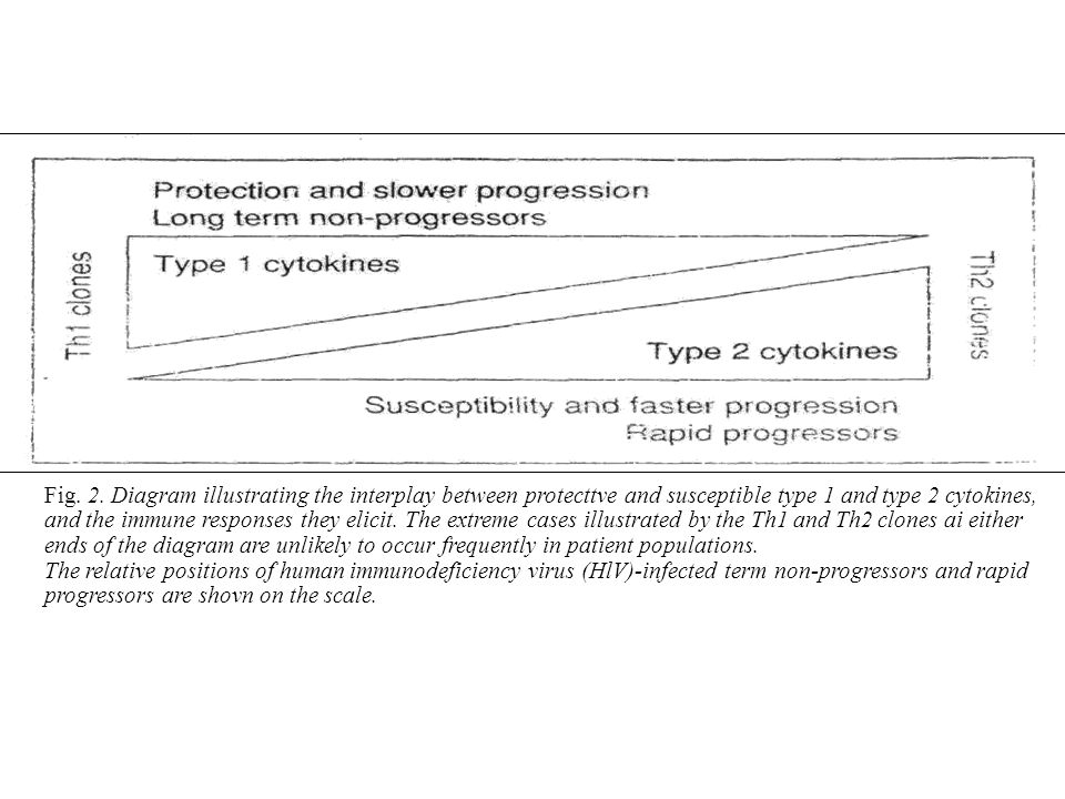 Fig. 2. Diagram illustrating the interplay between protecttve and susceptible type 1 and type 2 cytokines,