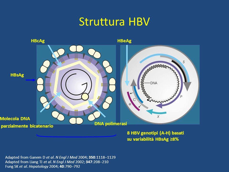 Struttura HBV HBcAg HBeAg HBsAg Molecola DNA parzialmente bicatenario