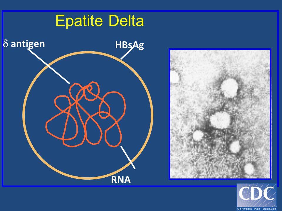 Epatite Delta  antigen HBsAg RNA