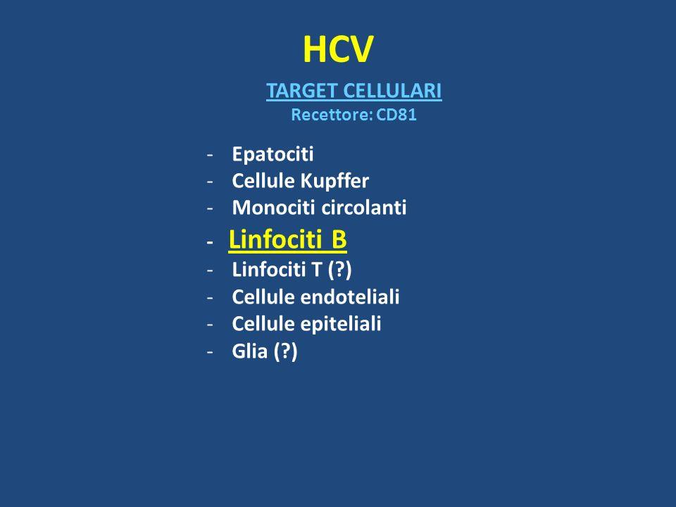 HCV TARGET CELLULARI Epatociti Cellule Kupffer Monociti circolanti