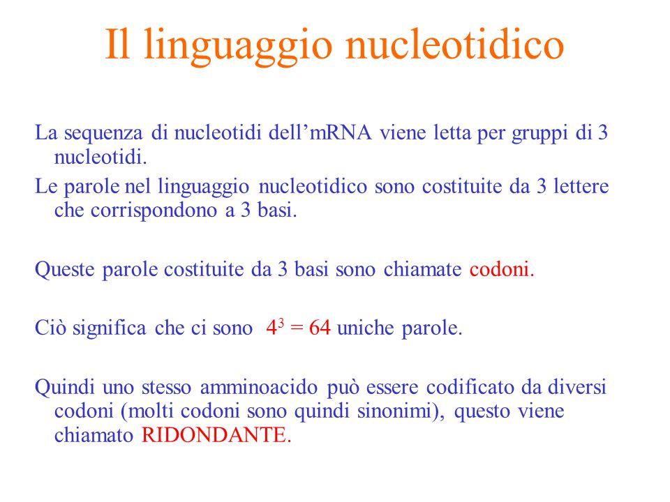 Il linguaggio nucleotidico