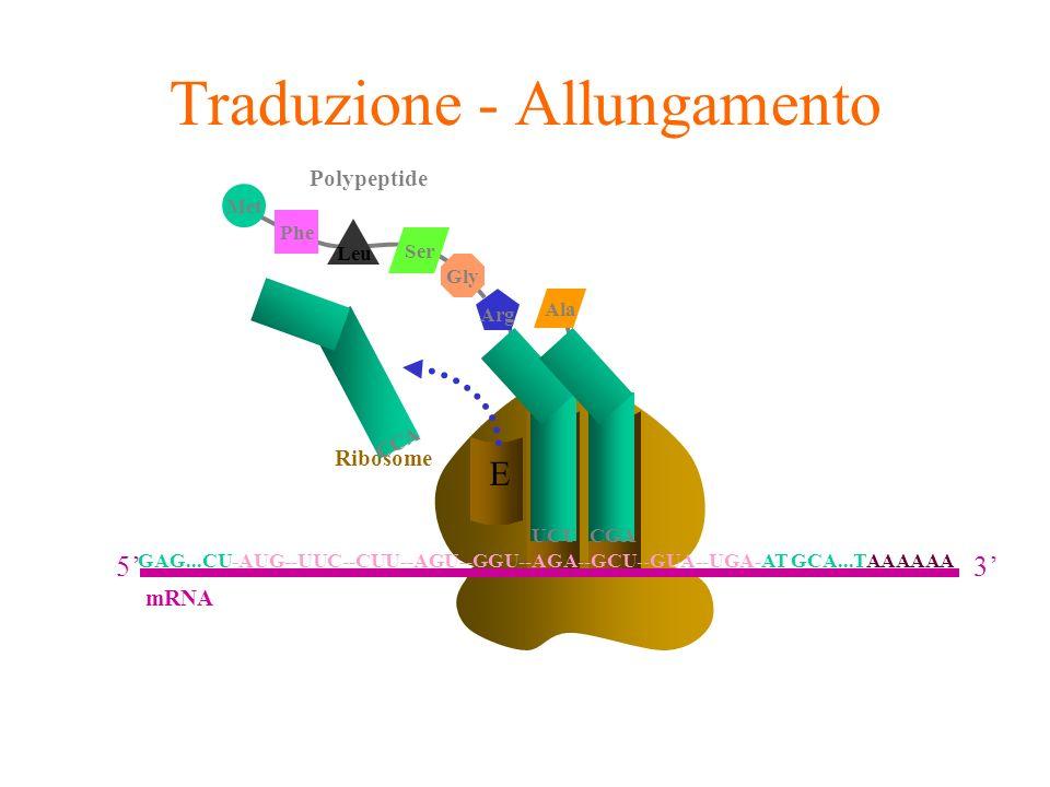 Traduzione - Allungamento