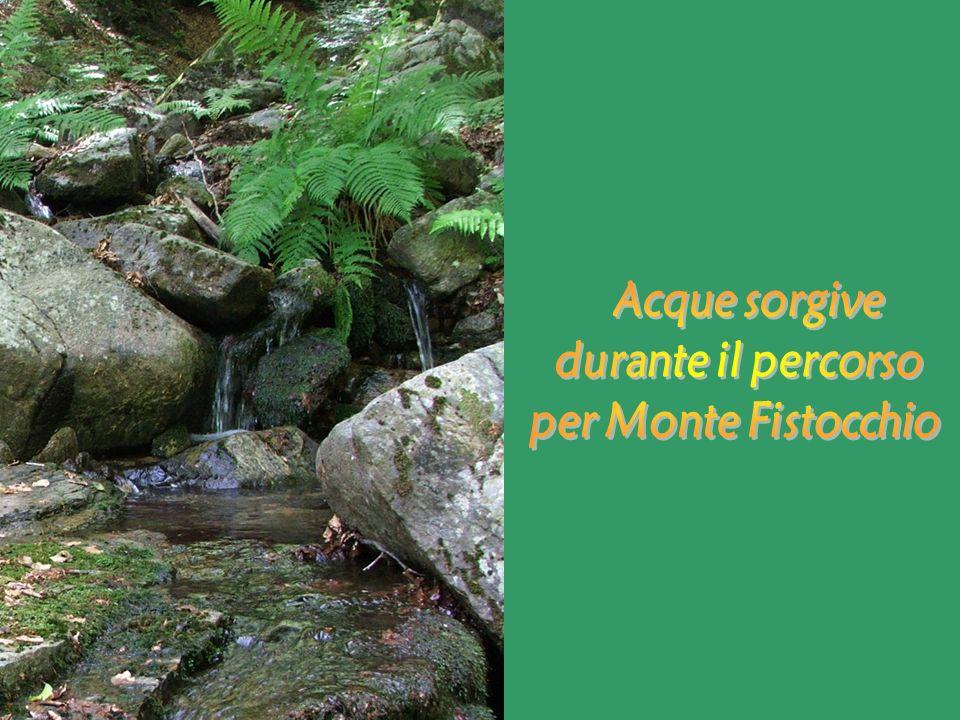 Acque sorgive durante il percorso per Monte Fistocchio