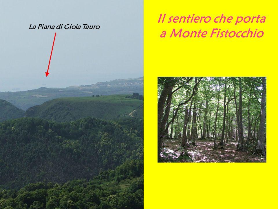 Il sentiero che porta a Monte Fistocchio