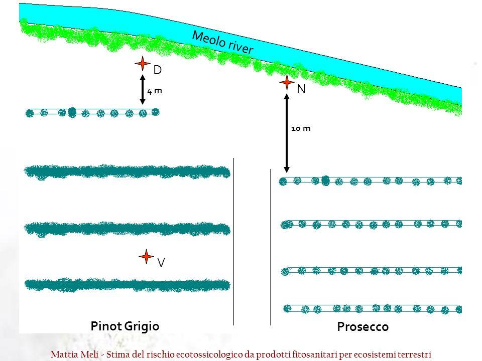 Meolo river D N V Pinot Grigio Prosecco 4 m 10 m