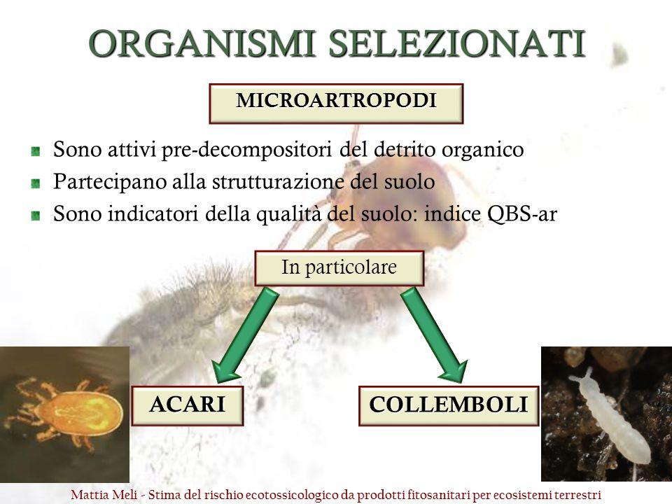 ORGANISMI SELEZIONATI