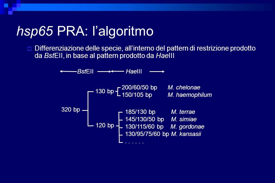 hsp65 PRA: l'algoritmo
