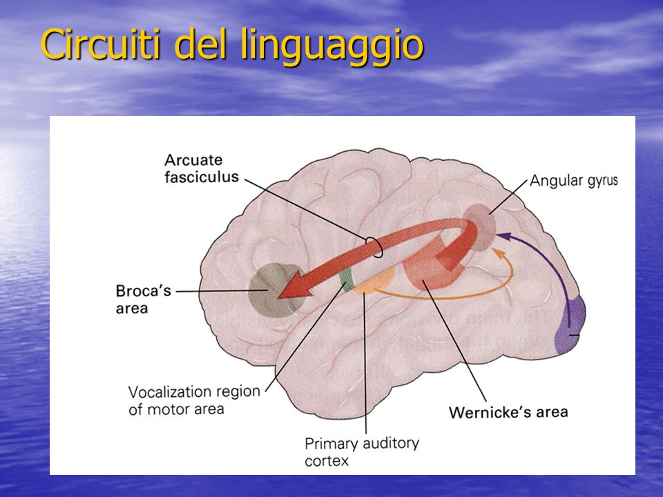 Circuiti del linguaggio