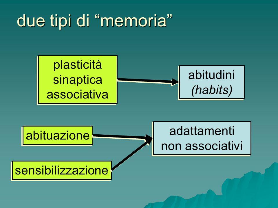 plasticità sinaptica associativa