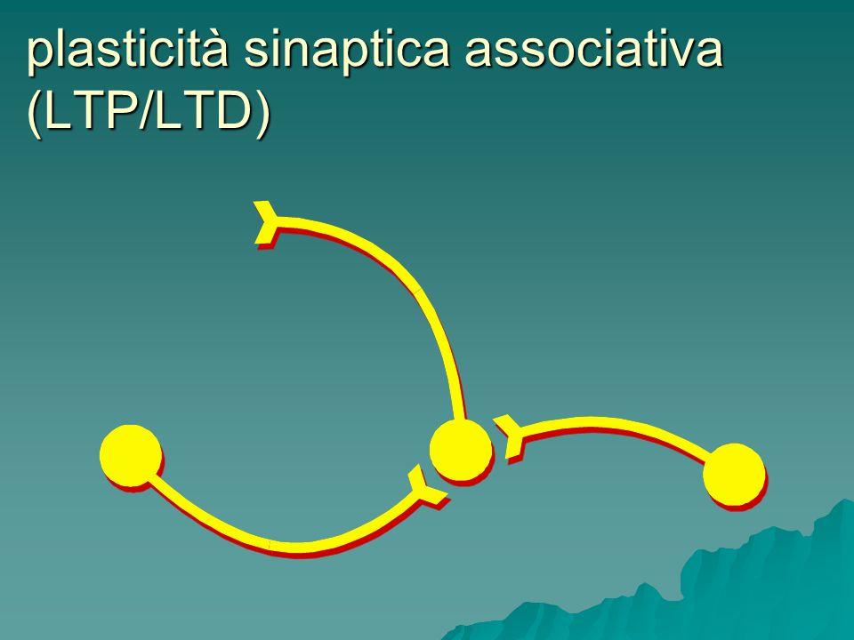 plasticità sinaptica associativa (LTP/LTD)