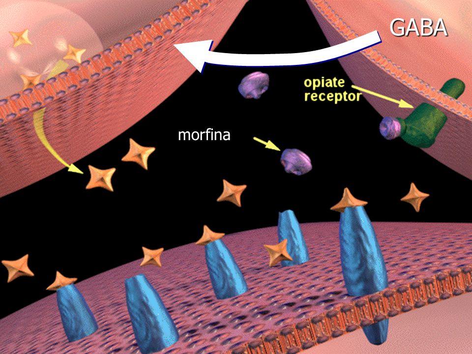 GABA morfina