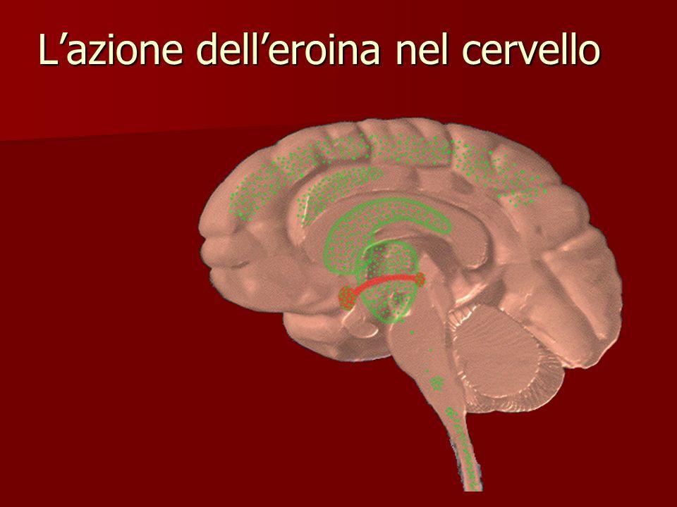 L'azione dell'eroina nel cervello