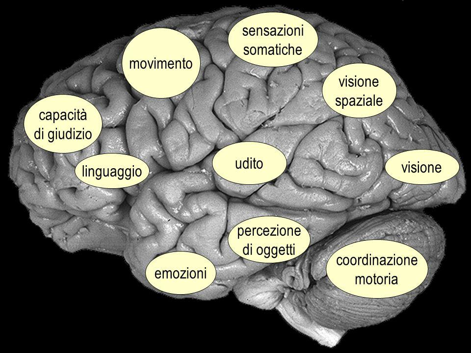 sensazioni somatiche. movimento. visione. spaziale. capacità. di giudizio. udito. visione. linguaggio.