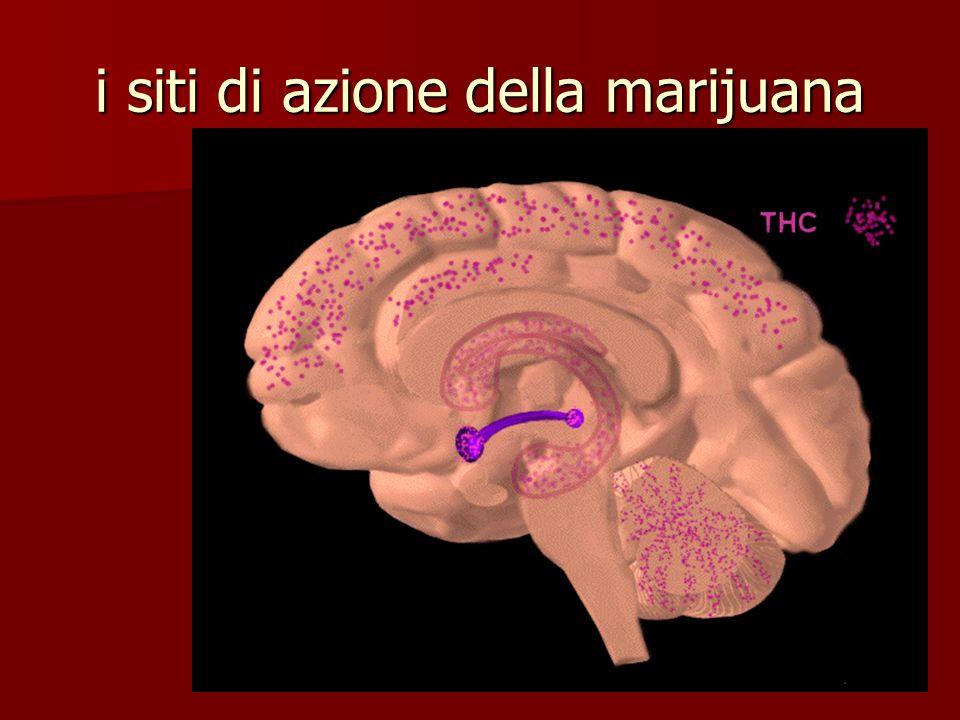 i siti di azione della marijuana