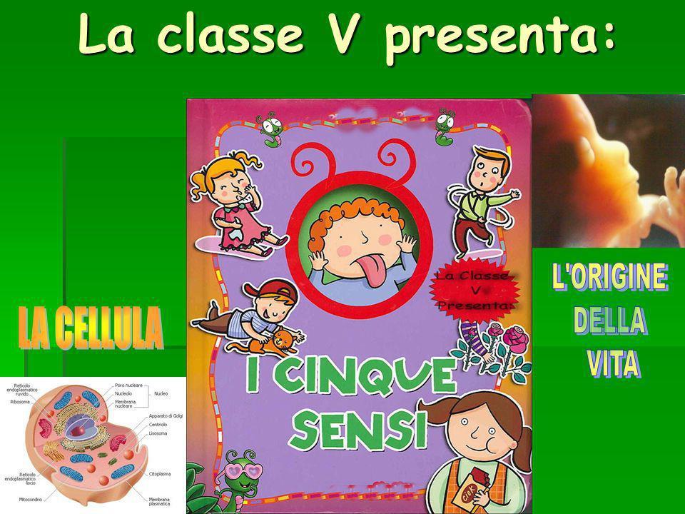 La classe V presenta: L ORIGINE DELLA VITA LA CELLULA