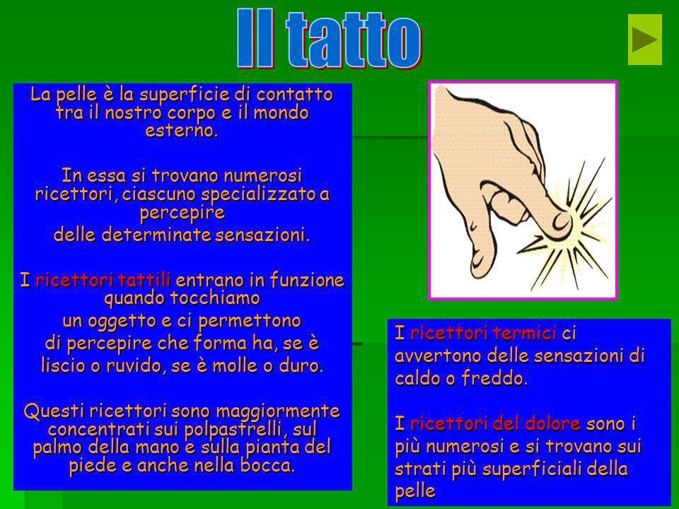 Il tatto La pelle è la superficie di contatto tra il nostro corpo e il mondo esterno.